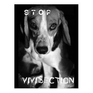 Stop vivisection - Postcard