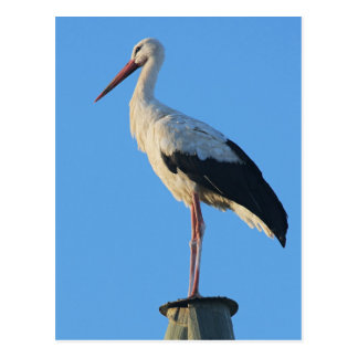 Stork on pole postcard