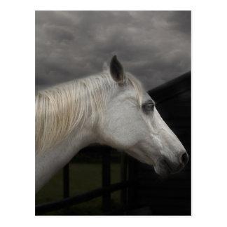 Storm horse postcard