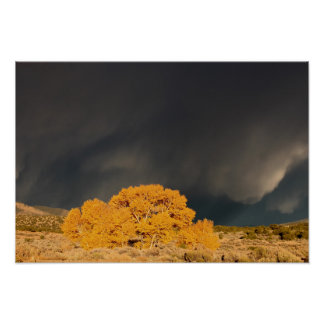 Storm over Cottonwood in Autumn Poster