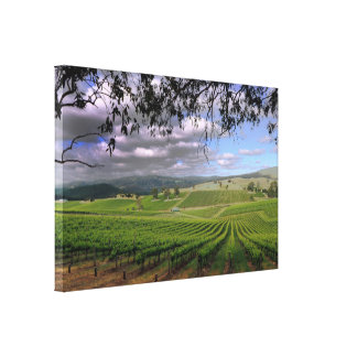 Stormy day in the Vineyard Canvas Print