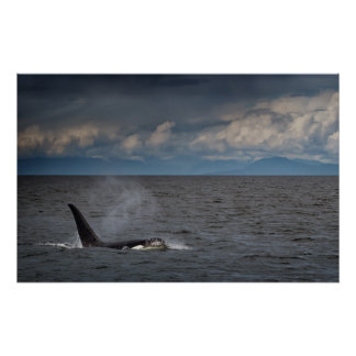 Stormy Orca Poster
