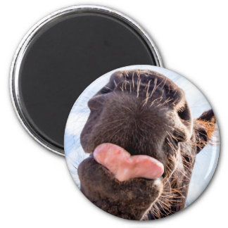 Straight from the Horse's Mouth Funny Horse Photo 2 Inch Round Magnet