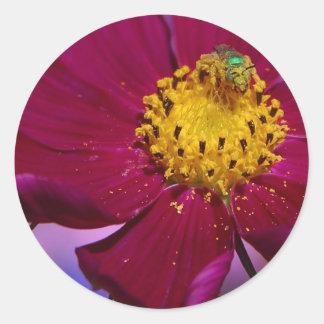 Strange Grren Bug On A Flower In Balboa Park Classic Round Sticker