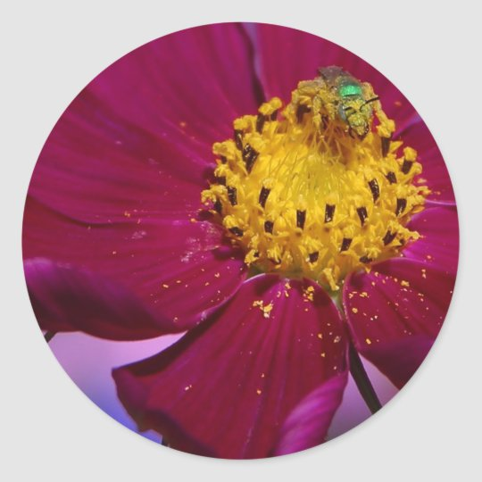 Strange Grren Bug On A Flower In Balboa Park Classic Round Sticker