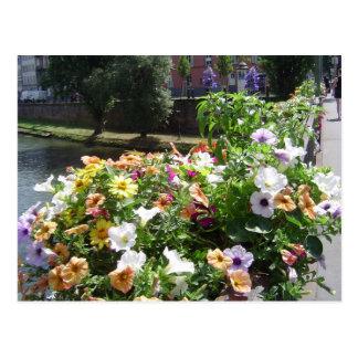 Strasbourg by day, flowers postcard