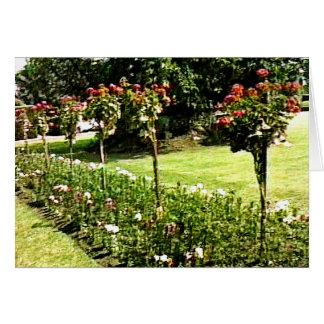 Stratford-upon-Avon Garden Rose snap-29602 jGibney Greeting Card