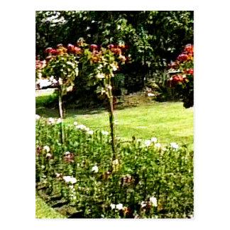 Stratford-upon-Avon Garden Rose snap-29602 jGibney Postcard