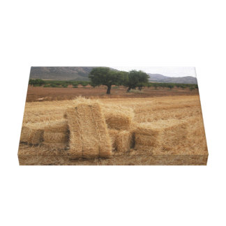 Straw Bales & Almond Trees Canvas Print