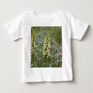 Straw foxglove (Digitalis lutea ssp australis) Baby T-Shirt