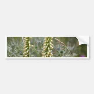 Straw foxglove (Digitalis lutea ssp australis) Bumper Sticker