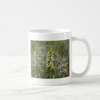 Straw foxglove (Digitalis lutea ssp australis) Coffee Mug
