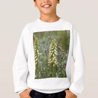 Straw foxglove (Digitalis lutea ssp australis) Sweatshirt