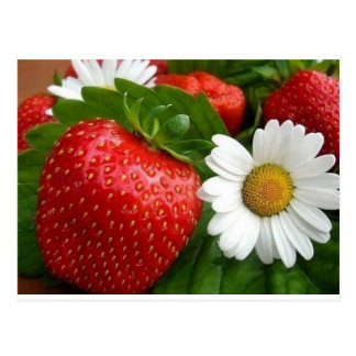 Strawberries & Daisies Postcard