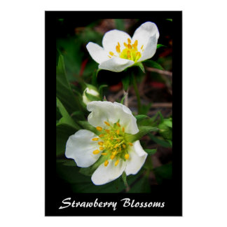 Strawberry Blossoms Poster