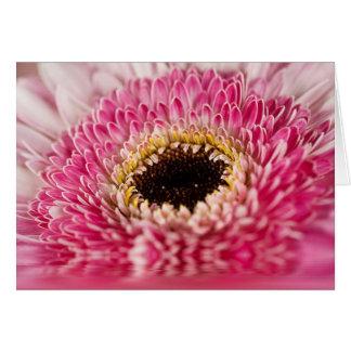 Strawberry Gerber Flower Macro Greeting Card