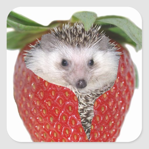 Strawberry Hedgie Sticker
