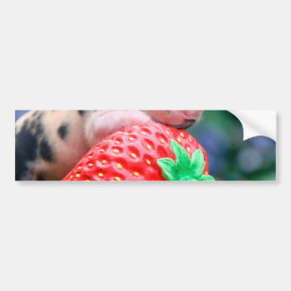 strawberry pig bumper sticker