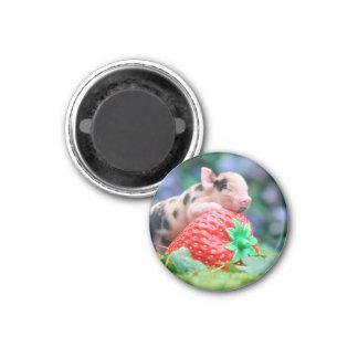 strawberry pig magnet