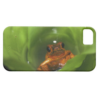 Strawberry poison frog hiding in leaves iPhone 5 cases