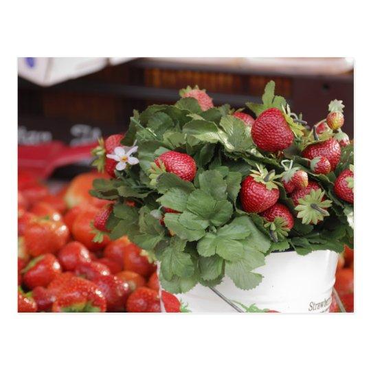 Strawberry Postcard