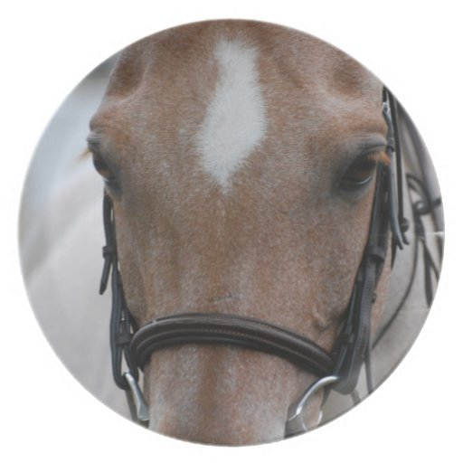 Strawberry Roan Horse Plate