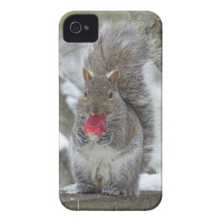 Strawberry squirrel Case-Mate iPhone 4 cases