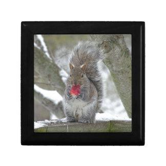 Strawberry squirrel gift box