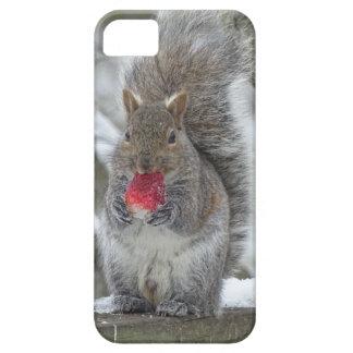 Strawberry squirrel iPhone 5 case