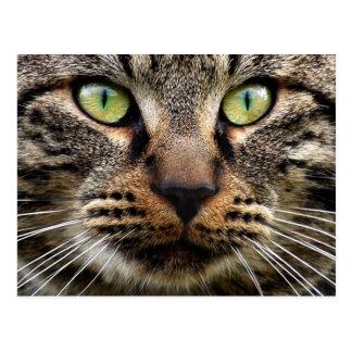 Stray Cat Stare Postcard