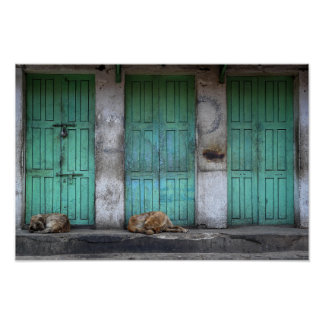 Stray dogs in front of dirty green doors poster