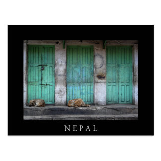 Stray dogs in front of dirty green doors text card