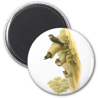 Streaked-throated Swallow 2 Inch Round Magnet