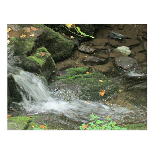 Stream in Blue Ridge Mountains Post Card