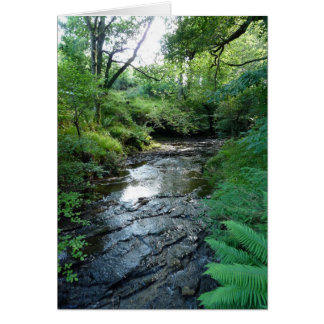 """""""Stream in Northumberland Woods"""" (6) Card"""
