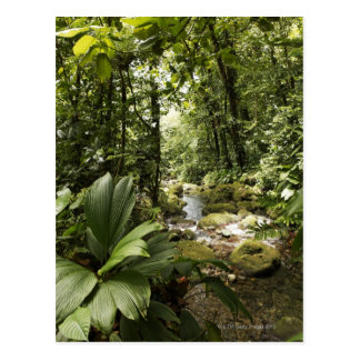 stream in rainforest, Dominica Postcard