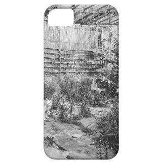 street cat iPhone 5 cover