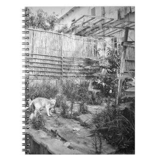 street cat notebook