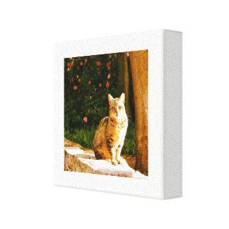 Street cat portrait canvas print