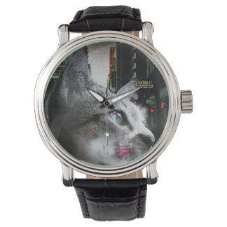 Street Cat Watch