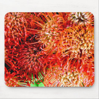 ~ Striking Banksia ~ Mouse Pad