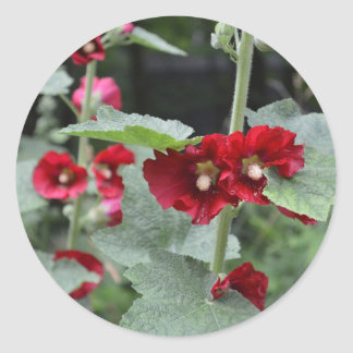 Striking Deep Red Hollyhock Flowers Althea Rosa Classic Round Sticker