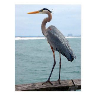 Striking Great Blue Heron Post Card