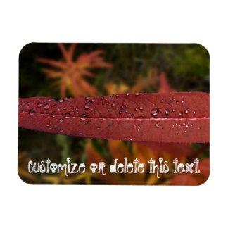 Stripe of Water Beads; Customizable Rectangular Photo Magnet