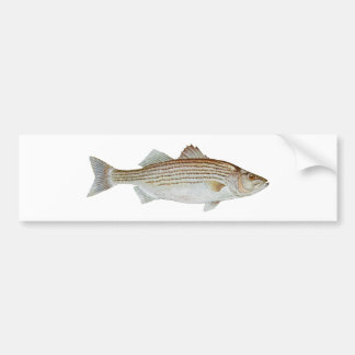 Striped Bass Art Bumper Sticker