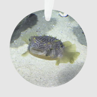Striped Burrfish Ornament