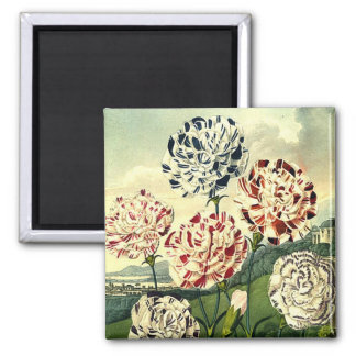 Striped Carnations Square Magnet