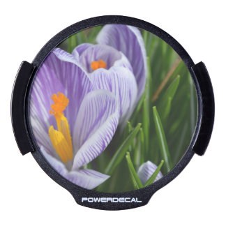 Striped Crocus LED Auto Decal