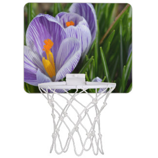 Striped Crocus Mini Basketball Backboard