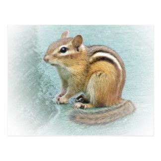 Striped Cutie - Chipmunk Postcard